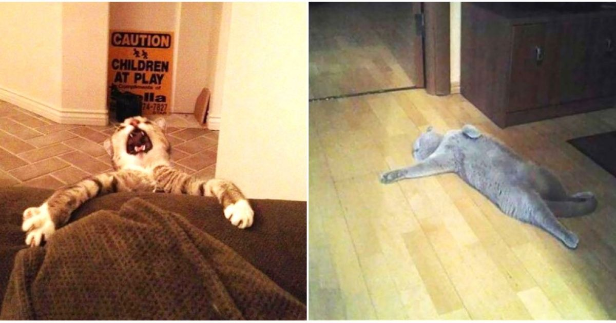 17Hilarious Cats That Deserve anOscar