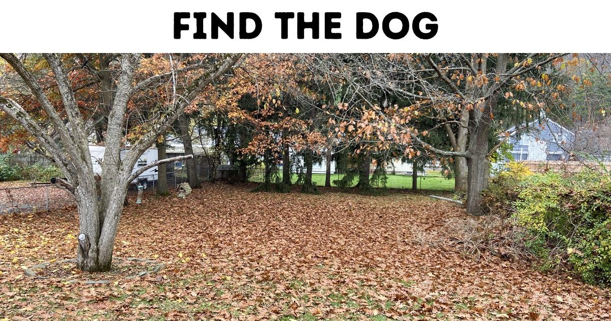 Test: Find the Hidden Animal or Object and Prove You Have an Eagle Eye