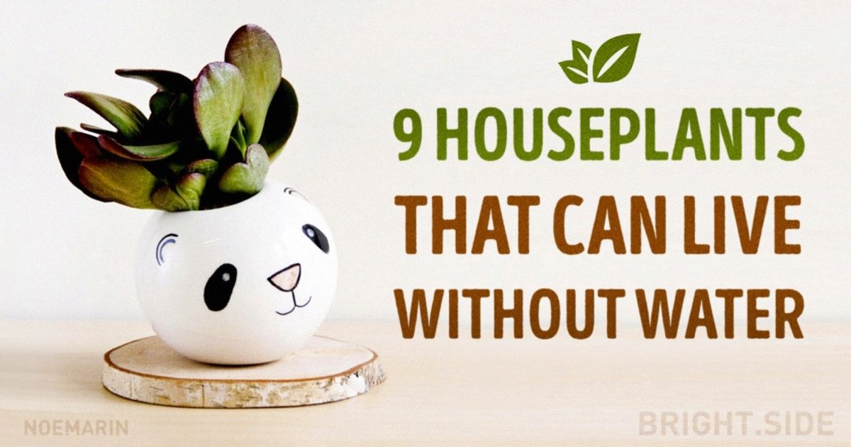 Nine amazing houseplants that can live without water