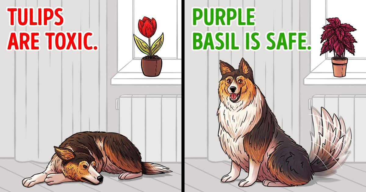 15 Plants to Avoid Keeping If You Have Pets