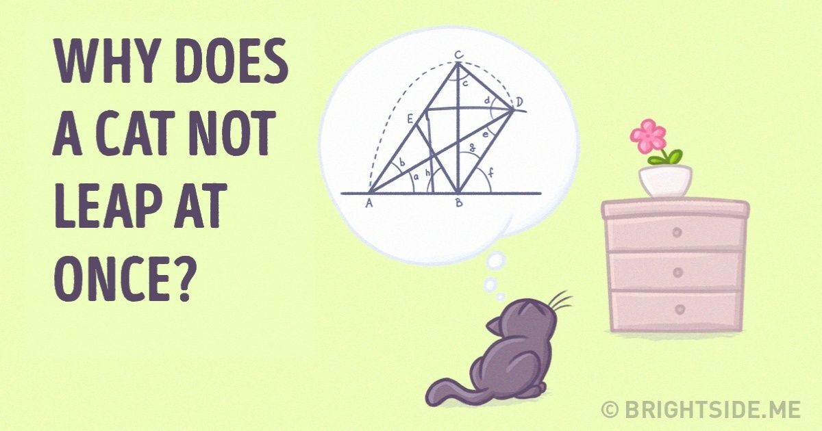 Scientists have proved that cats understand physics