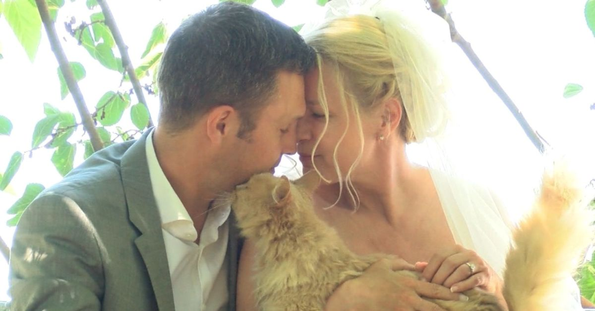 This couple got married in the presence of more than 1,000 cats