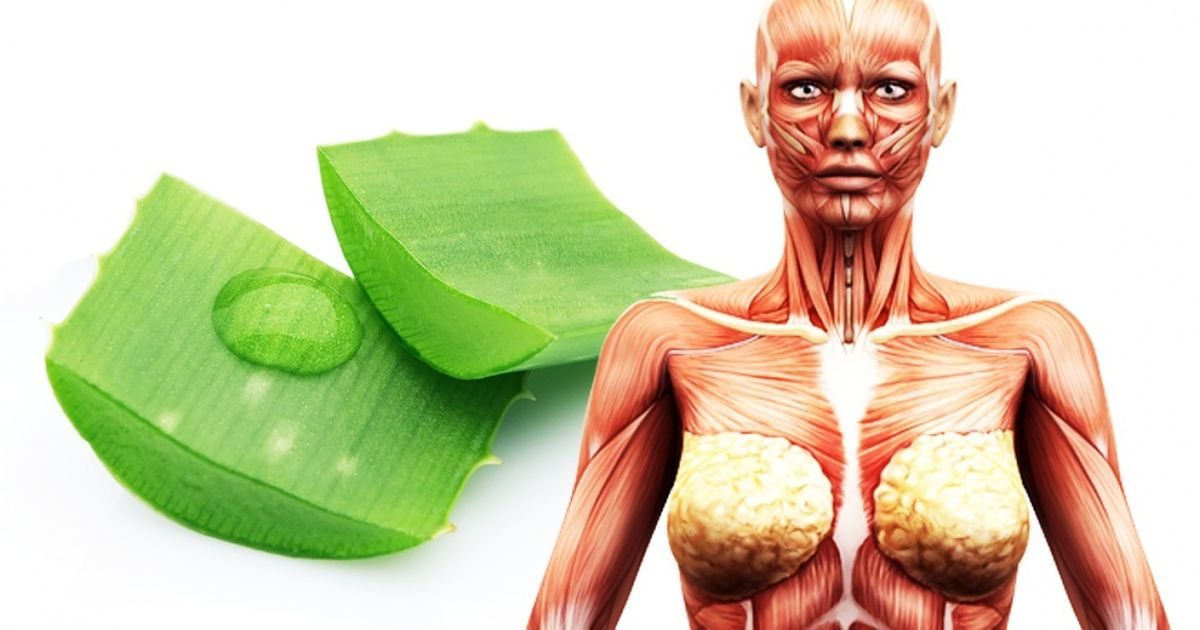 What Happens toYour Body When You Start Using Raw Aloe Vera Juice
