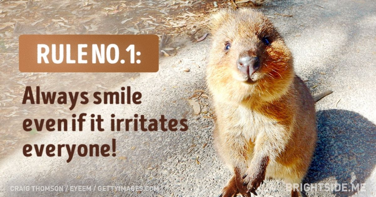 The quokka's rules for life