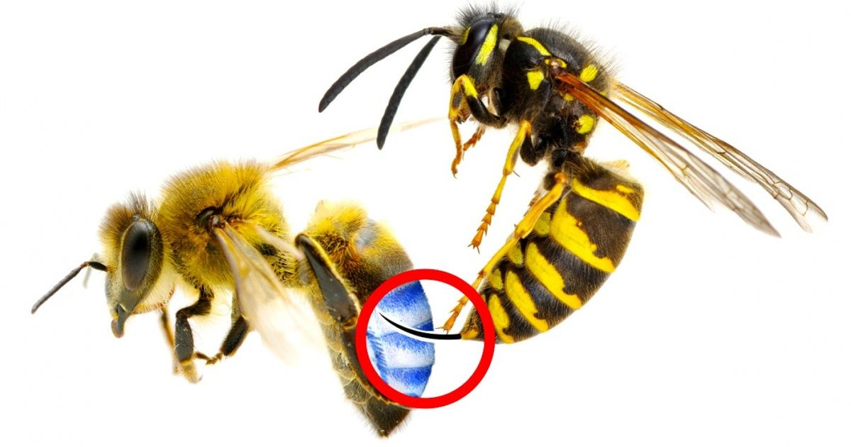 5Bee and Wasp Sting Emergency Hacks That Can Save Your Life