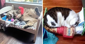 20 Cats Who Took Over Doll Beds Without Any Regret