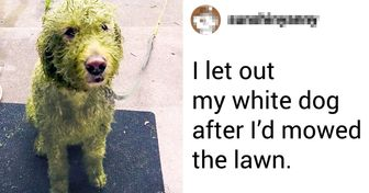 19 Pets That Made Their Owners Facepalm Without Much Effort