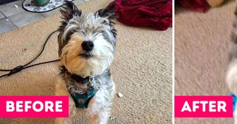 18 Times Hoomans Didn't Recognize Their Dogs After Picking Them Up From the Groomer