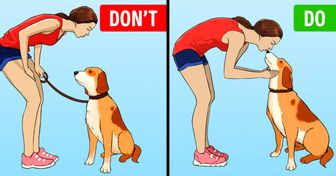 11 Ways You Might Be Treating Your Dog Wrong