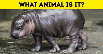 Test: Can You Guess Which Wild Animals These 15 Babies Are?