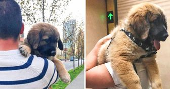 25 Tiny Pups Who Grew Up to Be Giants but Still Feel Like Babies Inside