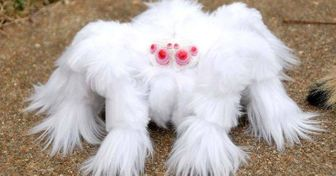 13Weird Creatures WeNever Knew Existed