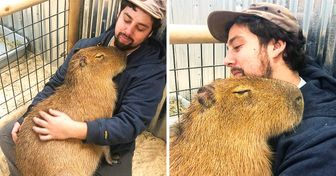 17 Photos Proving That One Capybara Is Sweeter Than 100 Puppies Combined
