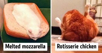 15 Cats Who Made Us Think They Are Food