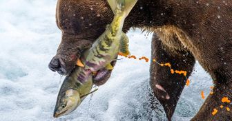 30National Geographic Contest Photos That Show The Magnificence ofOur Planet