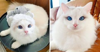 A Cat Is Winning the Internet Over With Its Bathtime Photos and Ocean Blue Eyes