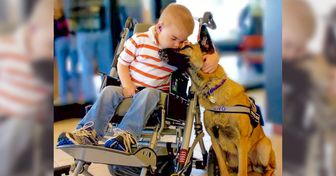 If a Service Dog Comes to You Without Its Owner, It Needs Your Help