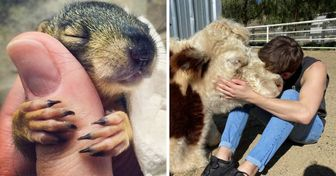 15+ Photos of Animals Giving Tons of Love That We All Need Right Now