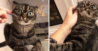 15 Cats Who Don't Have to Look Purrfect to Win Our Hearts