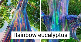 20+ Times Nature Showed Its Beauty Where It Was Least Expected