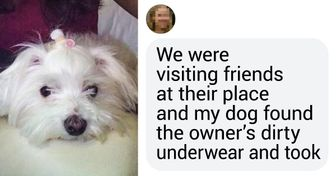 15 Bright Side Users Reveal the Funniest Pranks Their Pets Ever Pulled