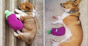20 Pets Who Love Their Toys More Than Anything