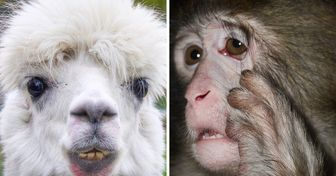 A Zoo Showed 15 Photos of Animals Who Got Hit Harder by Monday Than You Did