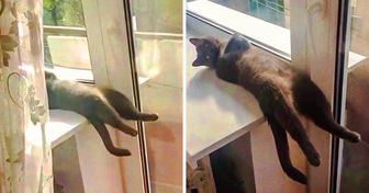 16 People Showed How Their Cats Sleep and You Won't See Anything Cuter Today