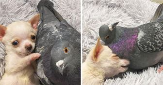 A Pigeon Who Can't Fly Met a Puppy Who Can't Walk, and They've Become Best Friends Forever