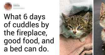 24 Animals That Were Fading Away Alone but Totally Got Transformed by Their New Owners' Love