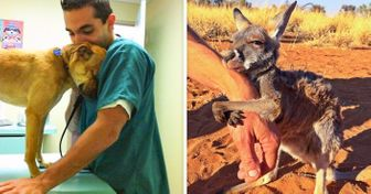 13Animals Who Didn't Forget toThank Their Rescuers
