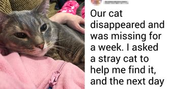 People From Japan Share a Game Changing Way to Find Your Lost Pet: Ask Stray Cats for Help