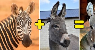 Meet Baby Zonkeys, the Half-Zebras, Half-Donkeys That Won the Genetic Jackpot