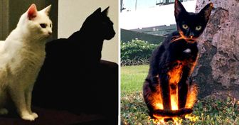 17 Pics That Prove Life Is Not the Same When There's a Black Cat in the House