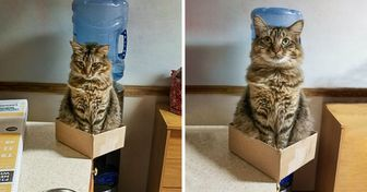 What Life Is Like When There's a Cat in the House (20+ Pics)