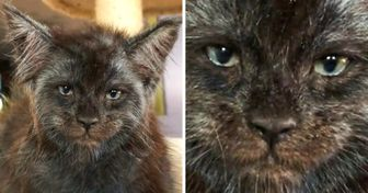 A Girl Breeds Maine Coons Whose Faces Look a Lot Like Human Ones