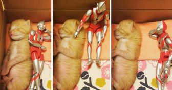 A Rescued Kitten Has Grown Up Under the Watchful Eye of a Superhero Protector