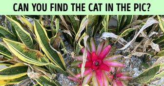 Test: Can You Find the Hidden Cat in These 20 Pics