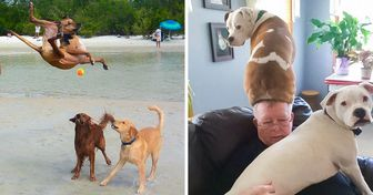 20 Dogs Whose Craziness Could Lift Anybody Up
