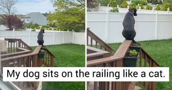 """20+ Animals Who Crashed the System Like They Were Neo From """"The Matrix"""""""