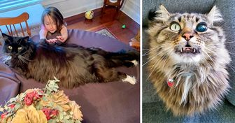 "20 Times Maine Coon Cats Were Too ""Wow"" to Handle"