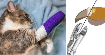 6 Reasons Why Declawing Your Cat Is a Selfish and Brutal Idea