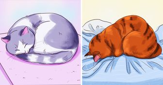 What a Sleeping Position Can Reveal About Your Cat
