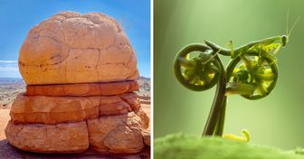 20 Pics That Prove Nature Always Has Something to Show Us