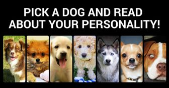 The Dog You Choose Can Say aLot About You