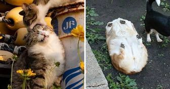 "20 Pets Whose ""Systems"" Crashed Temporarily"