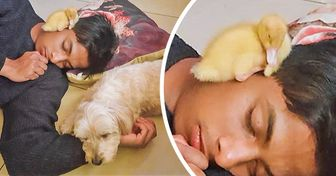 20 Bright Siders Shared Their Pets Who Won't Let Anything Stand Between Them and Their Nap