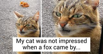 17 Emotional Cats and Dogs Whose Faces Say It All