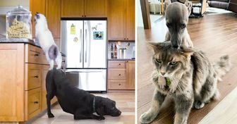 18 Photos That Prove Cats and Dogs Have Their Own Kind of Relationships