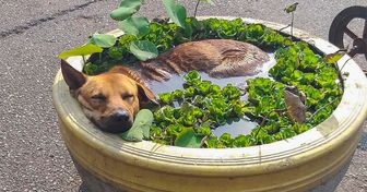 15+ Super-Chill Animals That Reached the Ultimate Level of Relaxation